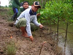 9-cara-menanaman-mangrove