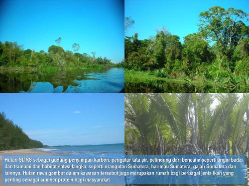 18 Forest types in SMRS as ecosystem protection, carbon pool and habitat of wildlifes