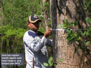 8 Measuring the mangrove tree's dbh