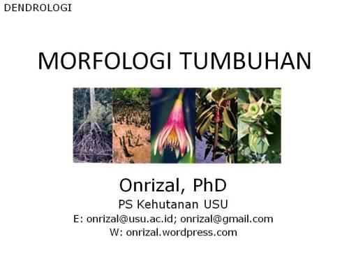 P2 DENDROLOGI-Morfologi Daun